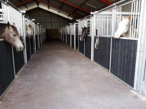 pensionstal met uitzicht op de paardenstallen