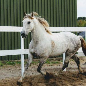 paardenhotel en vakantiestalling stal luxor